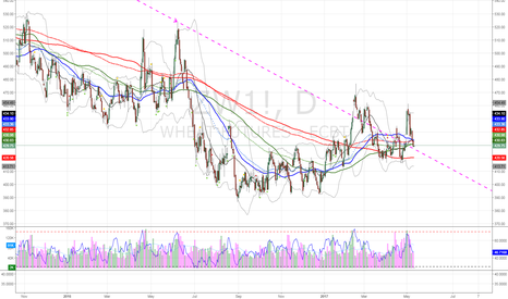 ZW1!: Wheat broken LT resis line being tested