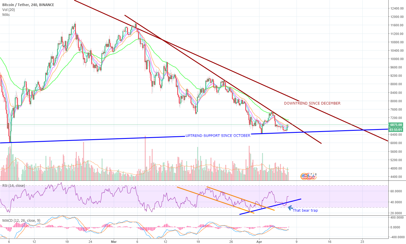 Bitcoin reaching Apex, Decision time