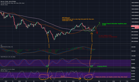 BTCUSD: WTF Bitcoin- Crucial Trial Time- Pop or Drop?