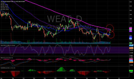 WEAT: WEAT - setup long play 2/2 (daily chart)