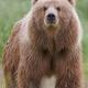 TeddytheBear