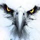 EagleTrades