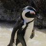 PenguinOffisial