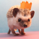 Hedgehog_king