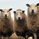 SheepGangShepherd
