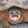 Turtle271