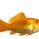 FellowFish