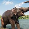 ELEPHANT_theory