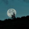 MoonlightCapital