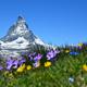 Swiss-Bitcoin-Investor