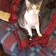 Bentley_the_cat