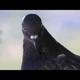 Pigeon007