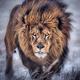 LionVersusBitcoin