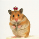 Hamster-Lord