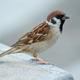 The_Sparrow