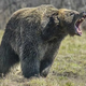The_Hungry_Bear