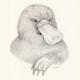 eloquentplatypus