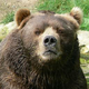 grizzly_13