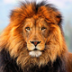 Cryptoer_Lion