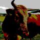 BullsOfHymir