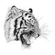 TigerSeo