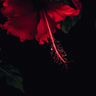 Ramia_42