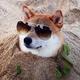 Dogecoin_Shill