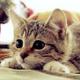 meowlike