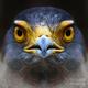eaglestar
