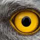 eaglepocket