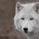 wolfelipediego
