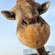 Trader_Giraffe