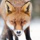 FOXofLA