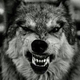 Heavy-Wolf