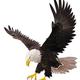 Eagle-Pips