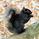 black_squirrel