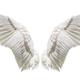 whitedevil