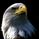 Eagle_777