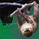Slothcharts14
