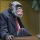 Decent_Ape