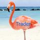 flamingotrader