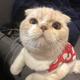 MeowMeow_Trader