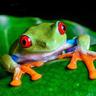 Frog_trader