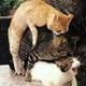 MeowNow