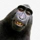 Gorilla1996