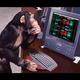 monkeyfury