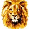 Lion-Trading