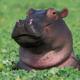 Cripptopotamus
