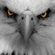 HawksTrade